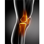 Bone, Joint Health and Inflammation
